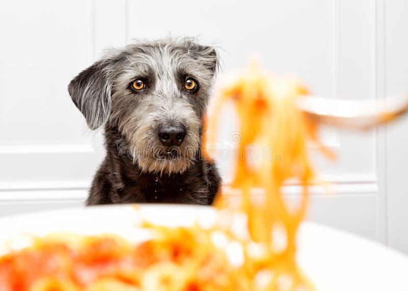 Głodny Psi Błagać dla Karmowy Drooling fotografia royalty free