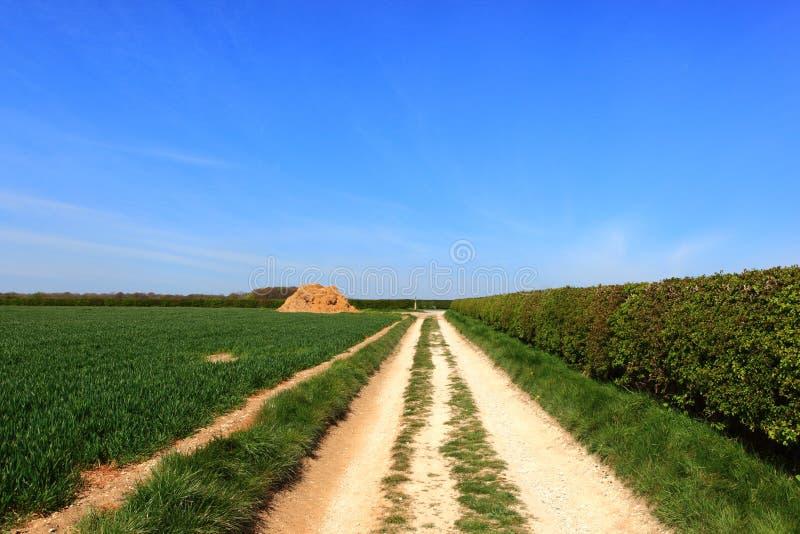 Głogowy hedgerow i orni pola chalky śladem w wiośnie obrazy stock