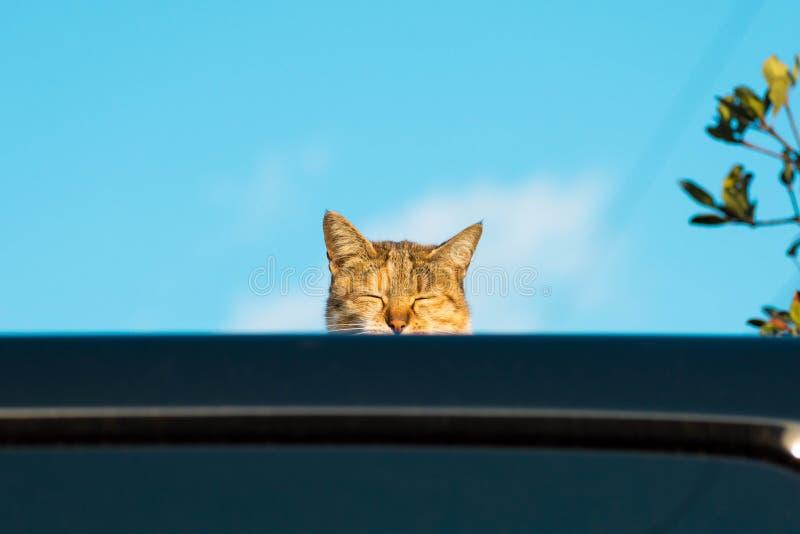 Głowa śliczny drzemanie kot zobaczy spod spodu z jasnym niebem i błękitem jako tło fotografia stock
