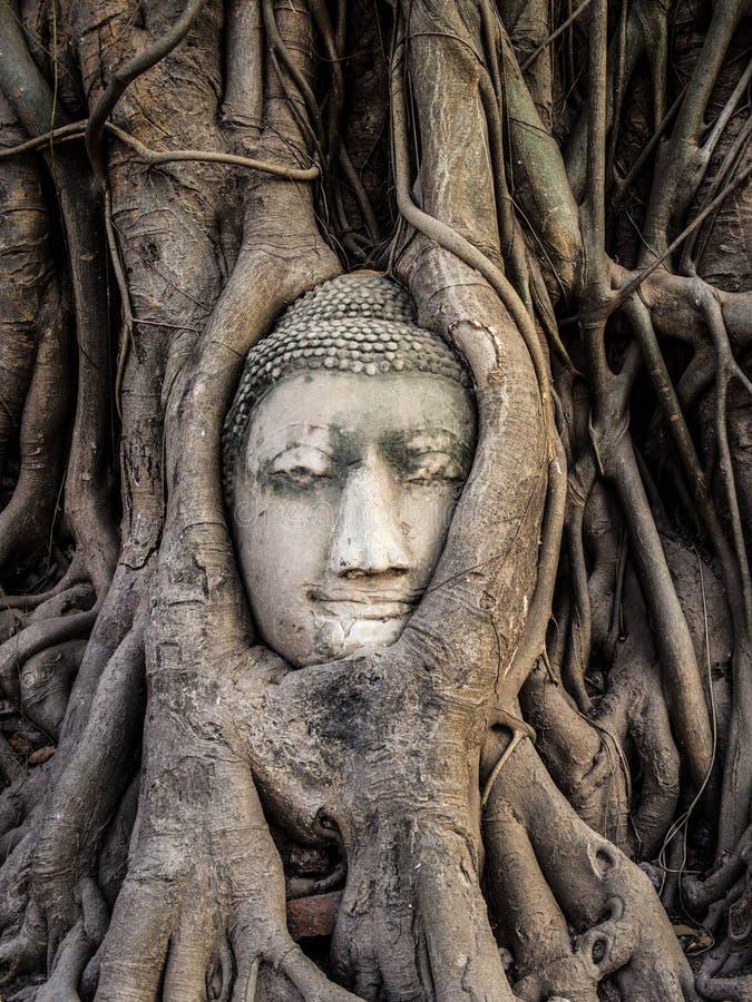 Głowa Buddha statua w Drzewnych korzeniach, Ayutthaya, Tajlandia zdjęcia royalty free