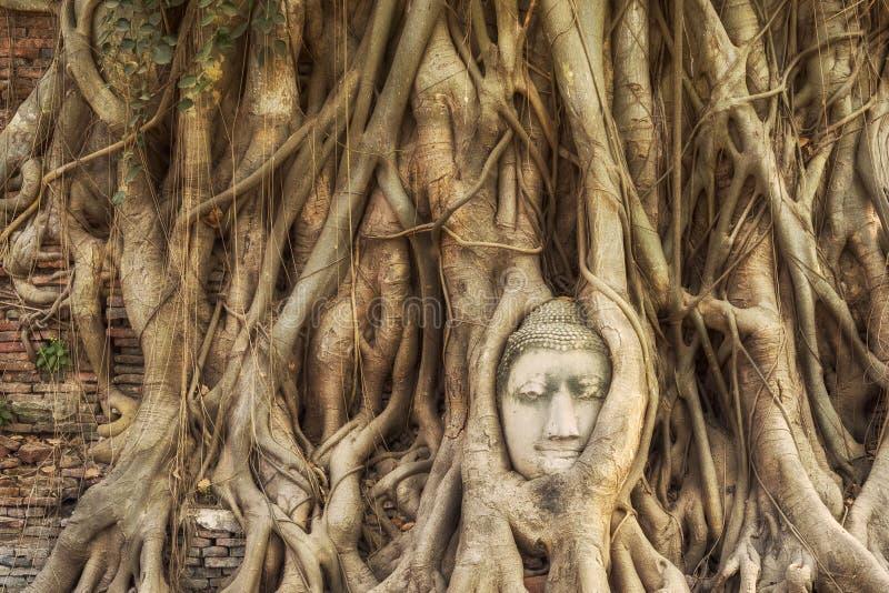 Głowa Buddha statua w Drzewnych korzeniach, Ayutthaya, Tajlandia zdjęcie stock