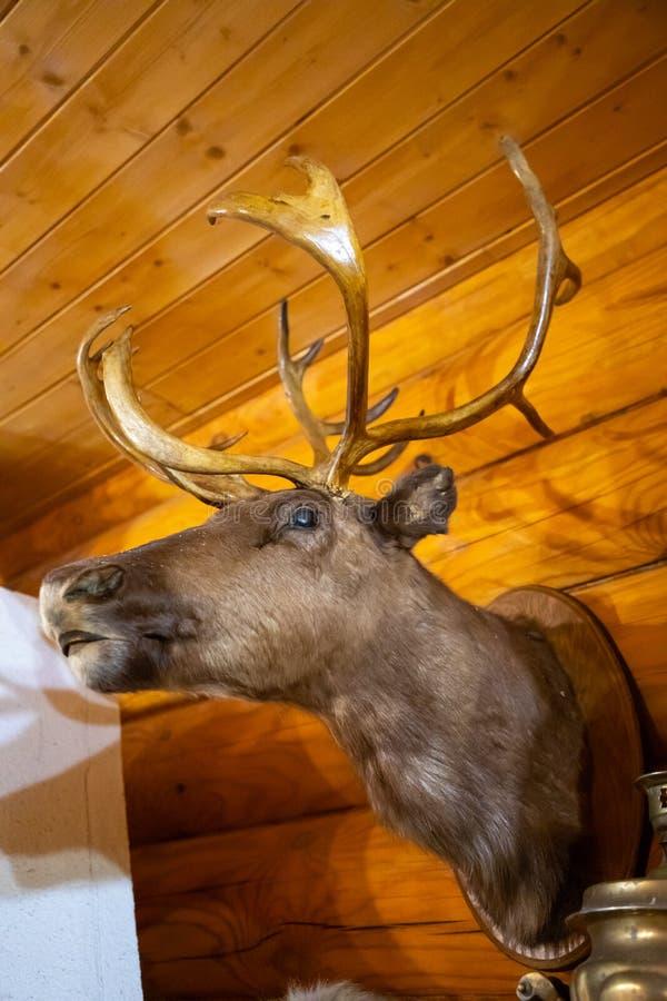 Głowa jelenia wiszącego na drewnianej ścianie domu obraz stock