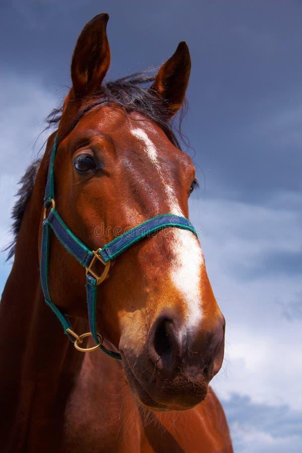 głowa konia obraz stock