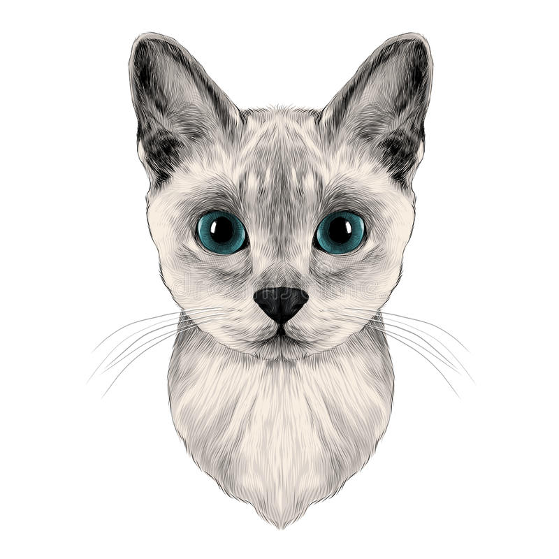 Głowa kot royalty ilustracja