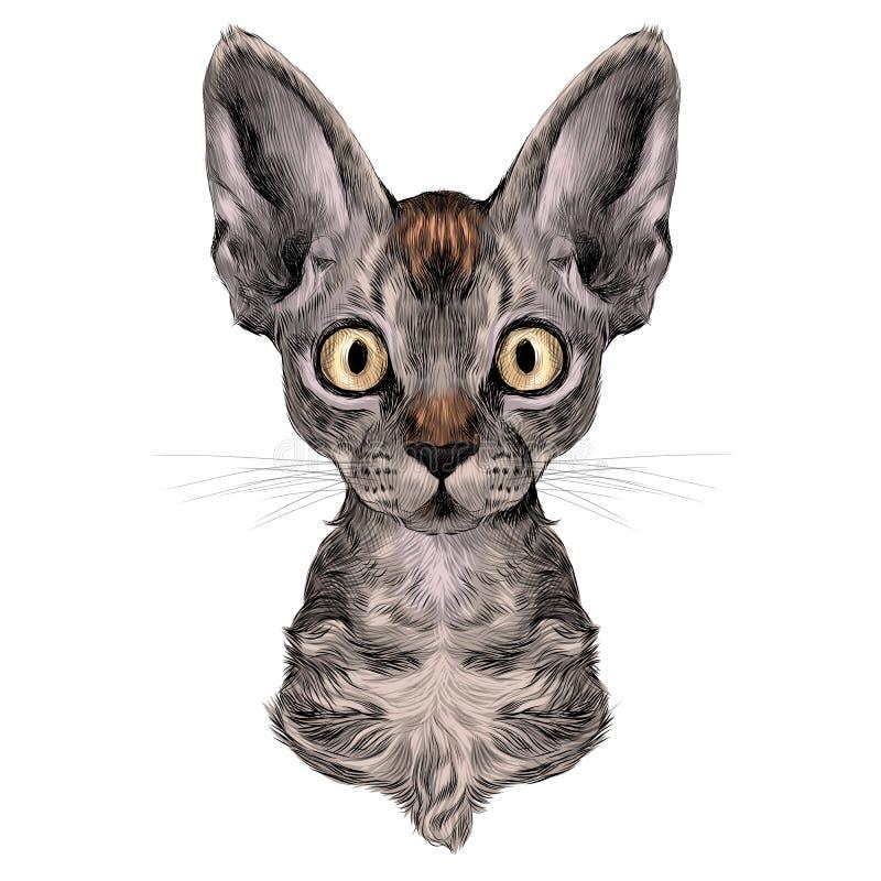 Głowa kot ilustracji