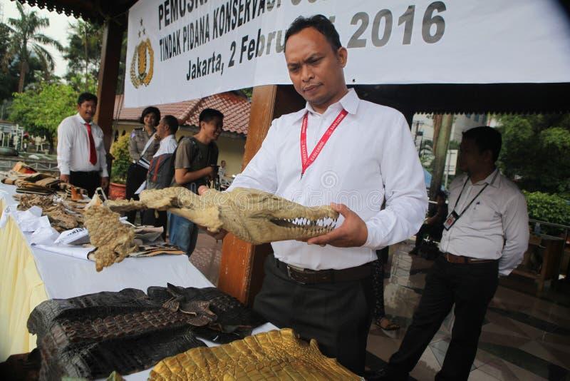 Głowa krokodyl w Indonezja obraz royalty free