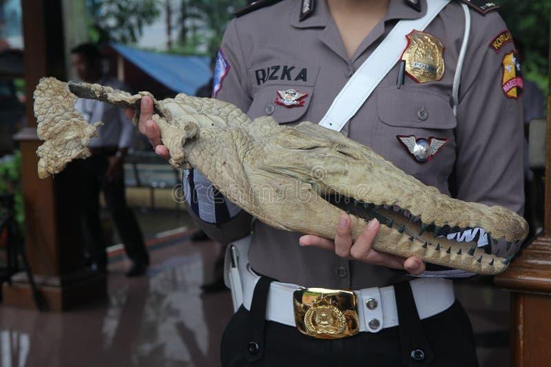 Głowa krokodyl w Indonezja obraz stock