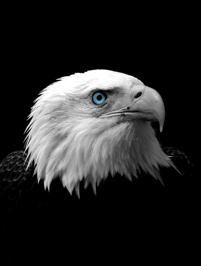 głowa orła łysego zdjęcia royalty free