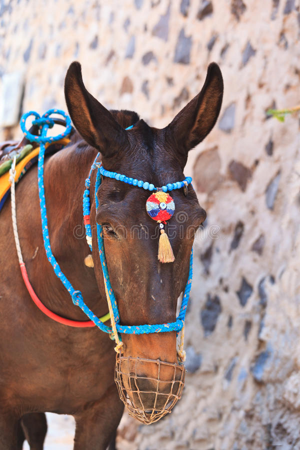 Głowa osioł od Santorini fotografia stock