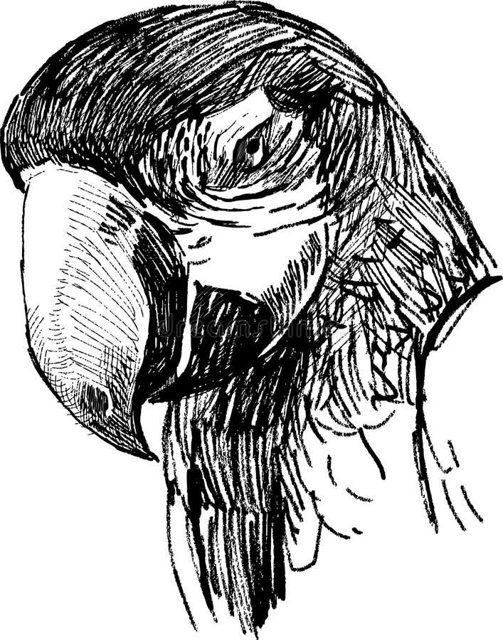 Głowa papuga ilustracja wektor