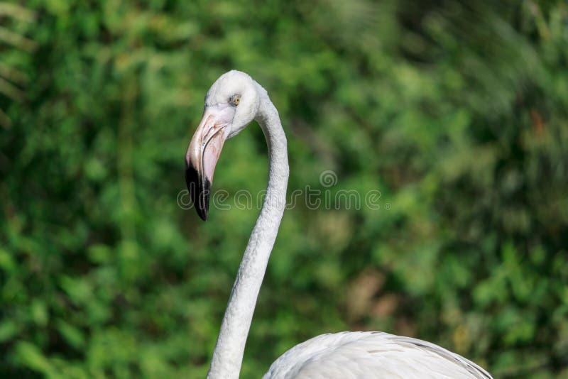 Download Głowa Strzelająca Flaming Z Bokeh Tłem Zdjęcie Stock - Obraz złożonej z pomarańcze, safari: 57659116