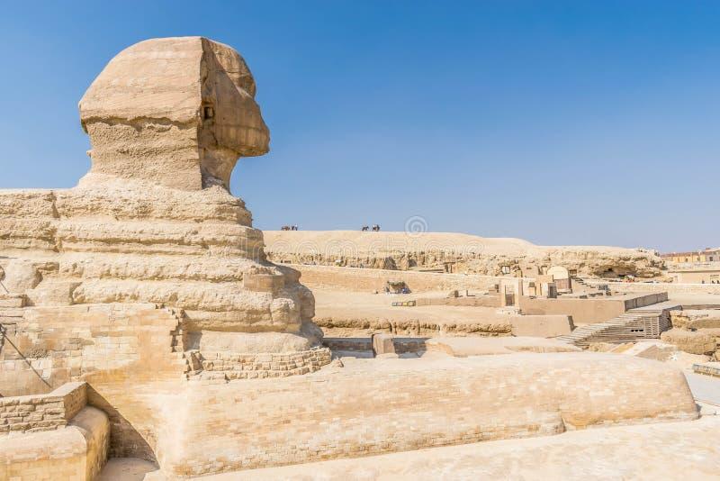 Głowa Wielki sfinks Giza zdjęcia stock