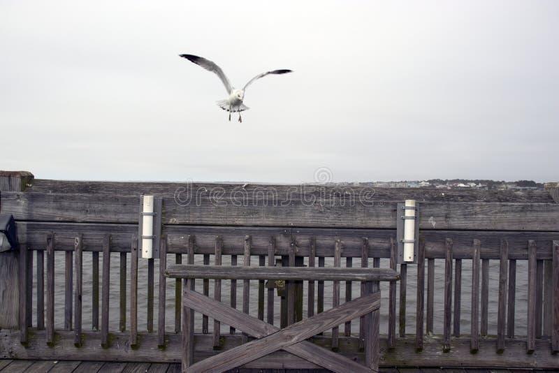 Głupota Plażowy Południowa Karolina, Luty 17, 2018 - opróżnia ławkę na połowu molu z dwa połowu prącia właścicielami wewnątrz i s zdjęcie royalty free