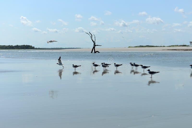 Głupoty plaża, Charleston, SC fotografia royalty free
