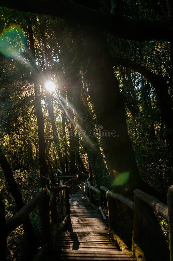G? banan i regnskog p? Doi Intanon nationalpark, Chiang Mai, Thailand Dagsljus berg fotografering för bildbyråer