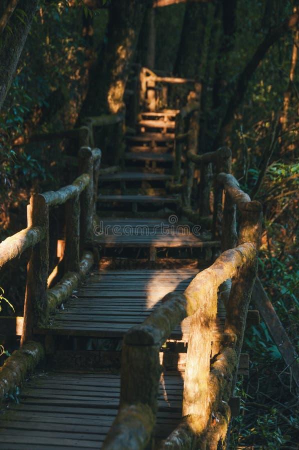 G? banan i regnskog p? Doi Intanon nationalpark, Chiang Mai, Thailand Dagsljus berg arkivfoto
