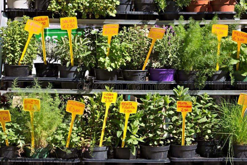 G?nes, herbes aromatiques dans des pots image stock