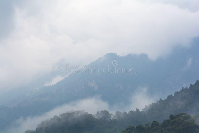 G?ry po deszczu Wodny wyparowywać z lasowego lasu zakrywającego niskimi chmurami zdjęcie royalty free