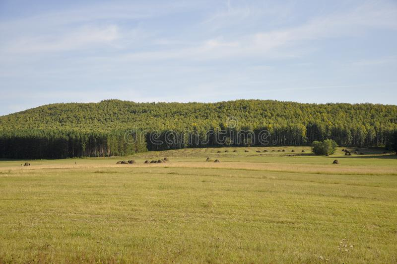 G?ry Zielony pole z odcieniami kolor żółty z haystacks i drzewami daleko Lato, Sierpie? obrazy royalty free