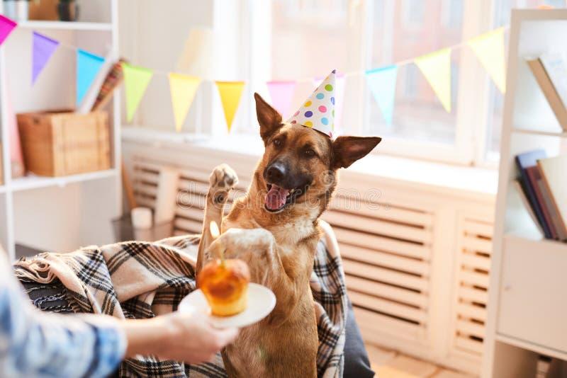 G?teau d'anniversaire pour le chien images libres de droits
