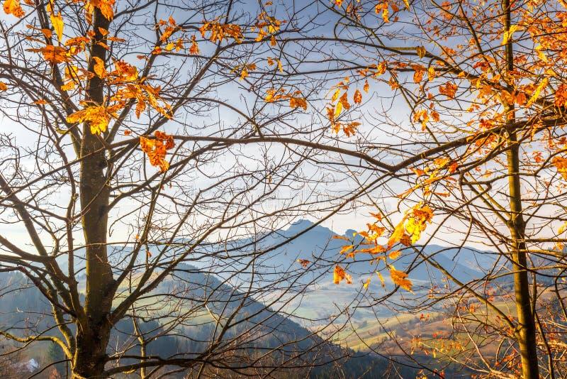 Gałąź w przedpolu jesień krajobraz fotografia royalty free