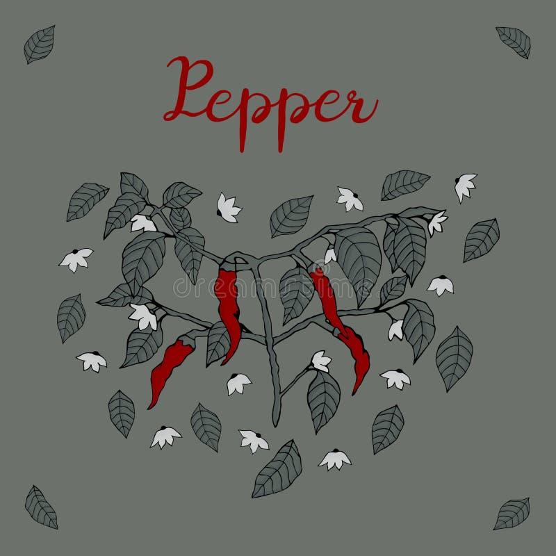 Gałąź chili pieprz, malująca z cztery czerwonymi pieprzami, kwiaty, liście z cieniami i wpisowy ` Pieprzy ` na szarości ilustracja wektor