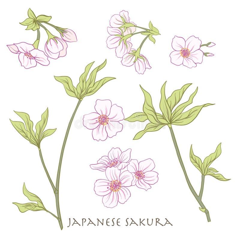 Gałąź czereśniowi okwitnięcia, japońska wiśnia Akcyjny kreskowy wektor il ilustracji