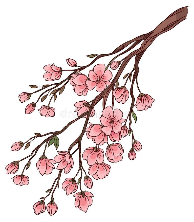 Gałąź czereśniowi okwitnięcia z delikatnymi różowymi kwiatami royalty ilustracja