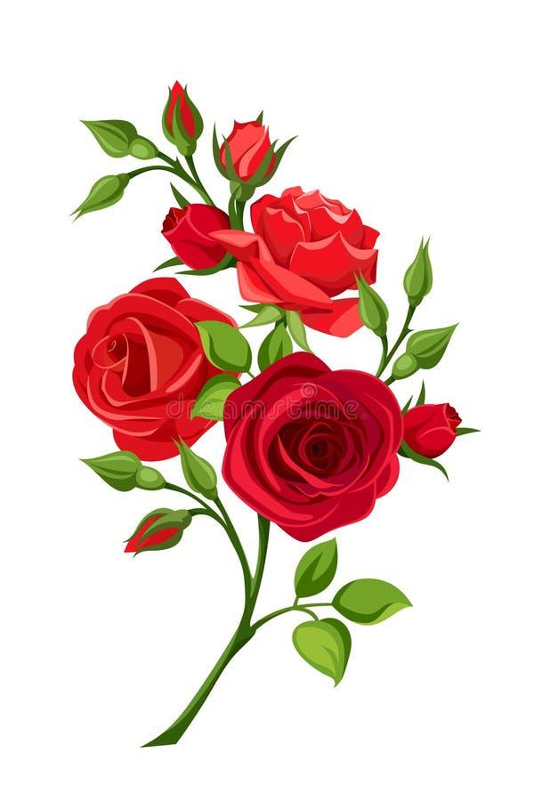 Gałąź czerwone róże również zwrócić corel ilustracji wektora ilustracji