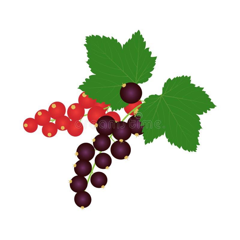 Gałąź czerwoni i czarni rodzynki z liśćmi ilustracja wektor