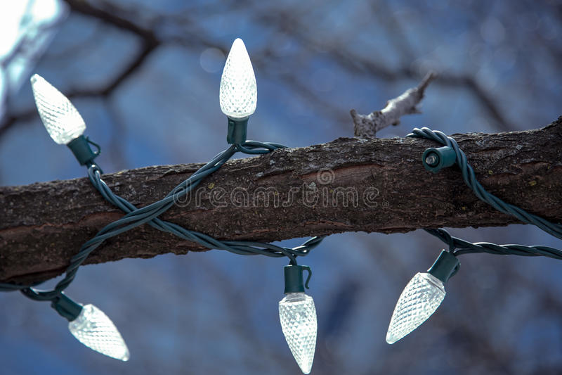 Gałąź dekorująca z bożonarodzeniowe światła zdjęcia royalty free