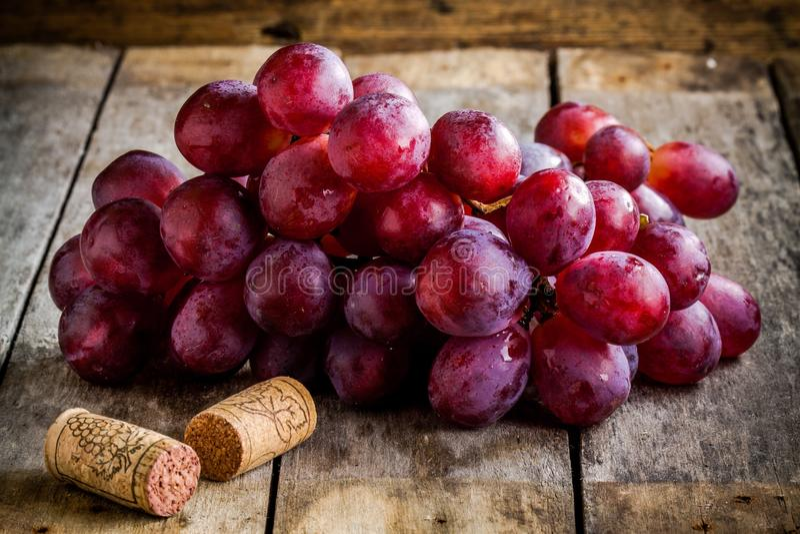 Gałąź dojrzali organicznie winogrona z korkami dla wina obraz royalty free