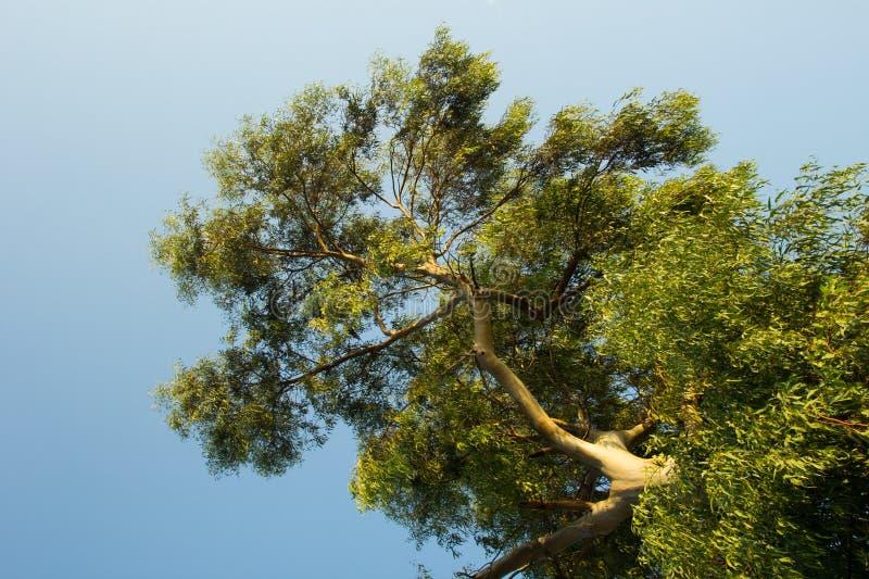 Gałąź drzewny widok spod spodu zdjęcia stock
