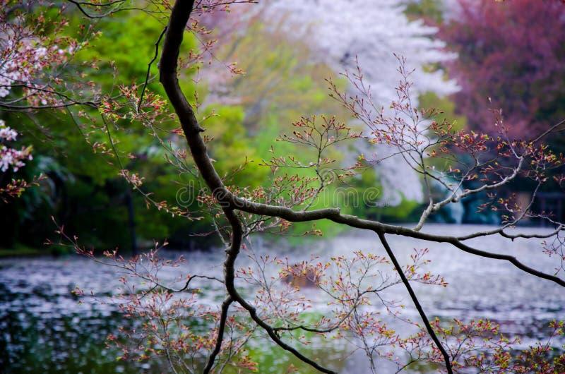 Gałąź drzewo na rozmytym jeziorze obrazy royalty free