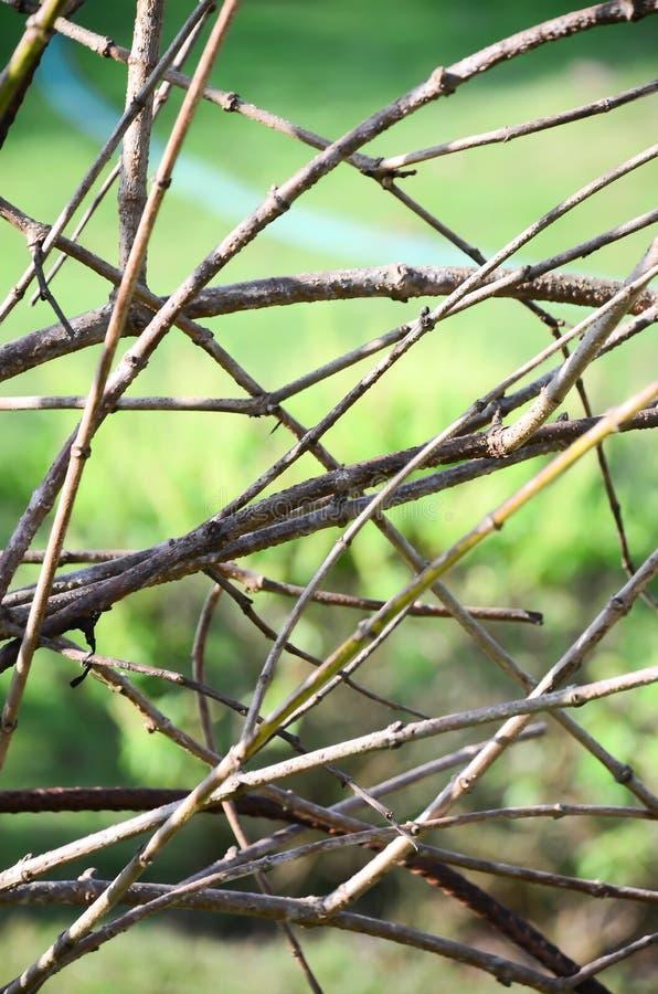 Download Gałąź Drzewo Przeciw Zielonemu Tłu Zdjęcie Stock - Obraz złożonej z struktura, barkentyna: 53778632