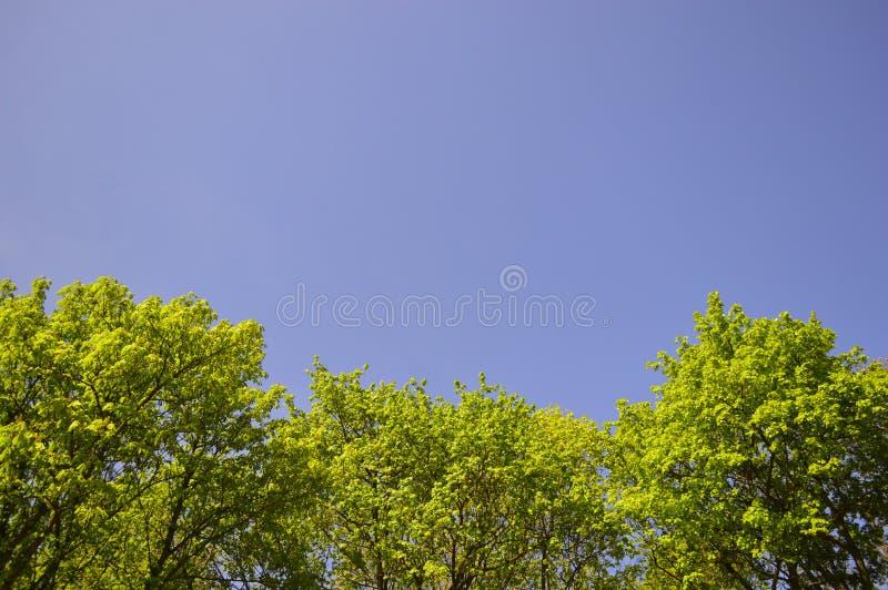 Gałąź i jasny niebieskie niebo fotografia royalty free