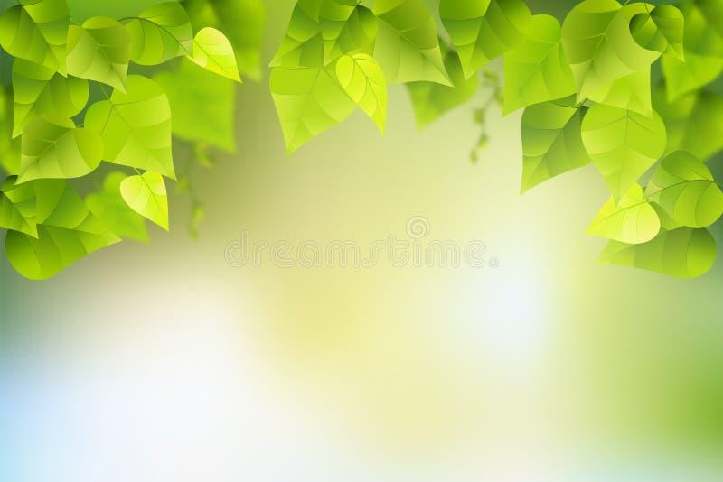 Gałąź i liście na natury tle fotografia stock