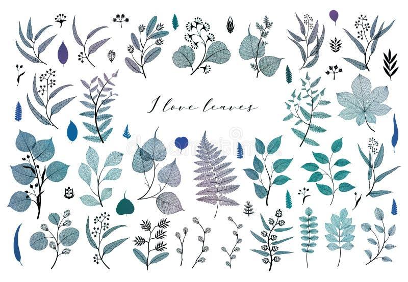 Gałąź i liście, spadek, wiosna, lato Rocznik botaniczna ilustracja, kwieciści elementy w błękicie royalty ilustracja
