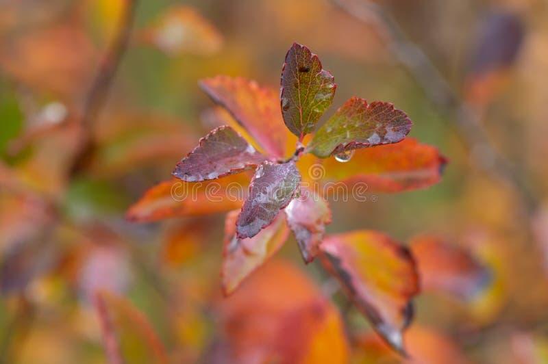 Gałąź jesienny drzewo zdjęcie stock