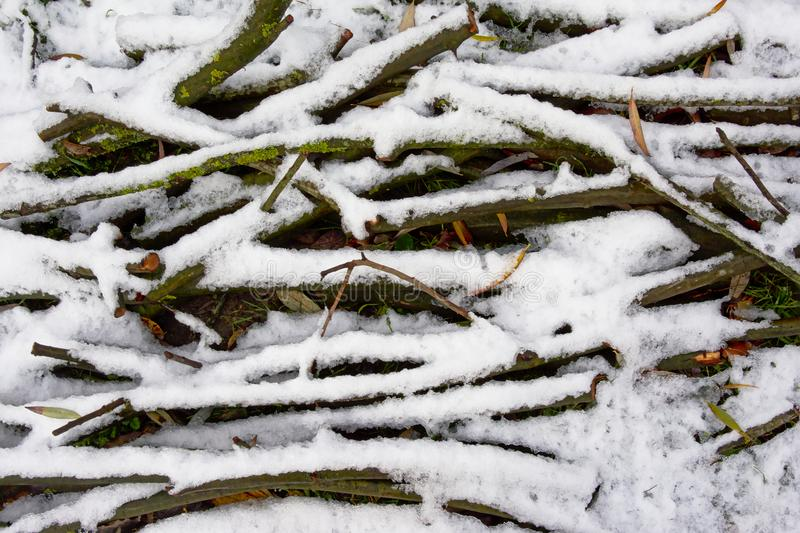 Gałąź kłaść na ziemi pod śniegiem zdjęcie royalty free