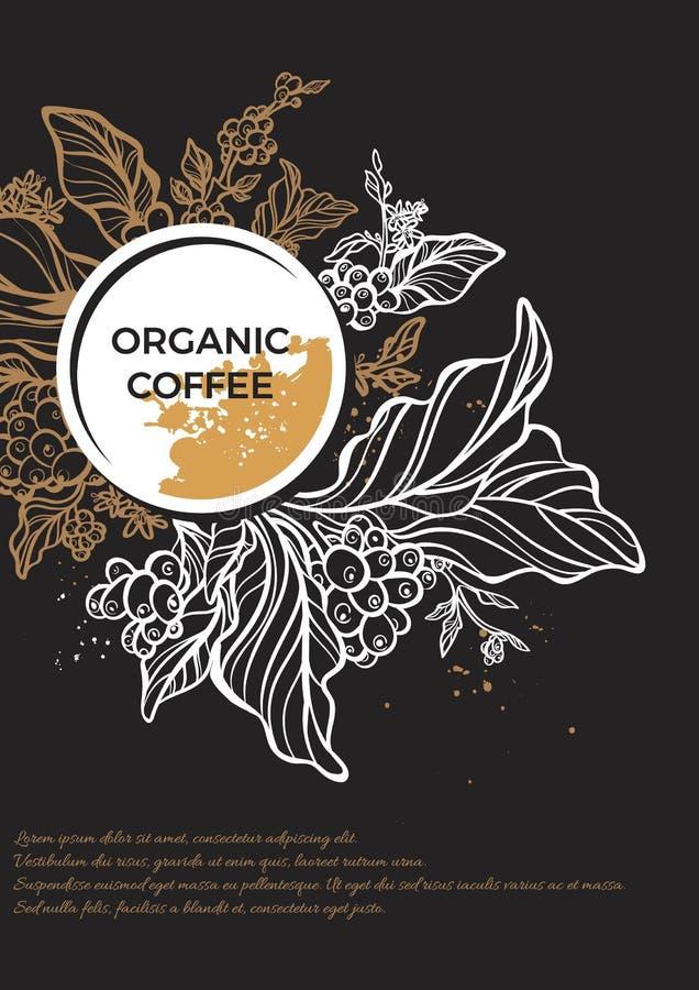 Gałąź kawowy drzewo z liśćmi, kwiatami i kawowymi fasolami, Botaniczny rysunek kwiecisty szablon ilustracja wektor