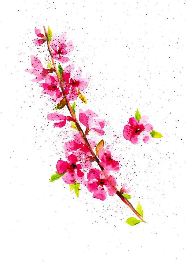 Gałąź kwiatonośna jabłoń wśród abstrakcjonistycznych kropel Akwareli ilustracja odizolowywaj?ca na bia?ym tle ilustracji