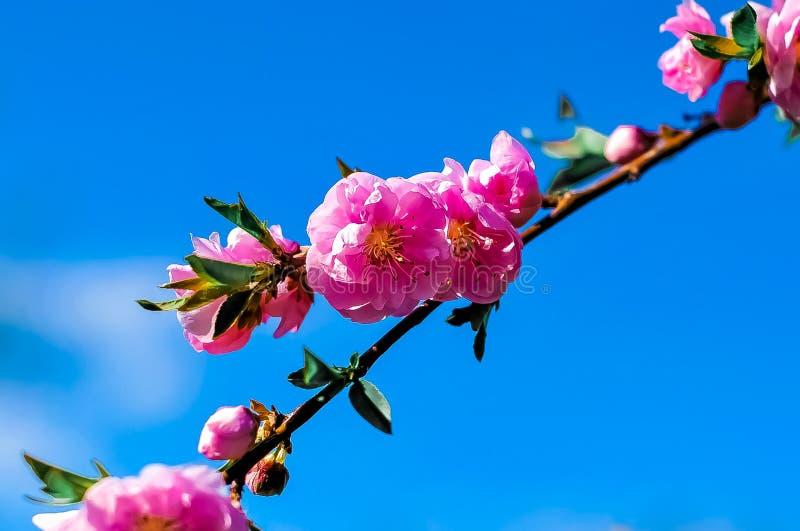 Gałąź kwitnąć kwitnie przeciw niebu obrazy stock