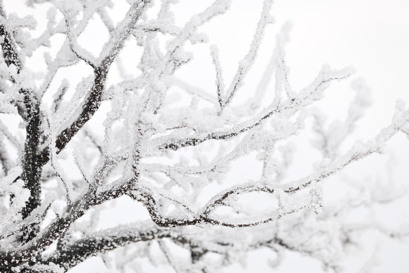 gałąź marznący drzewo obraz stock