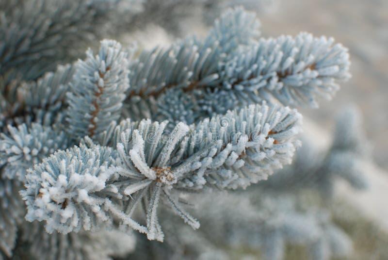 gałąź marznący drzewo obrazy royalty free
