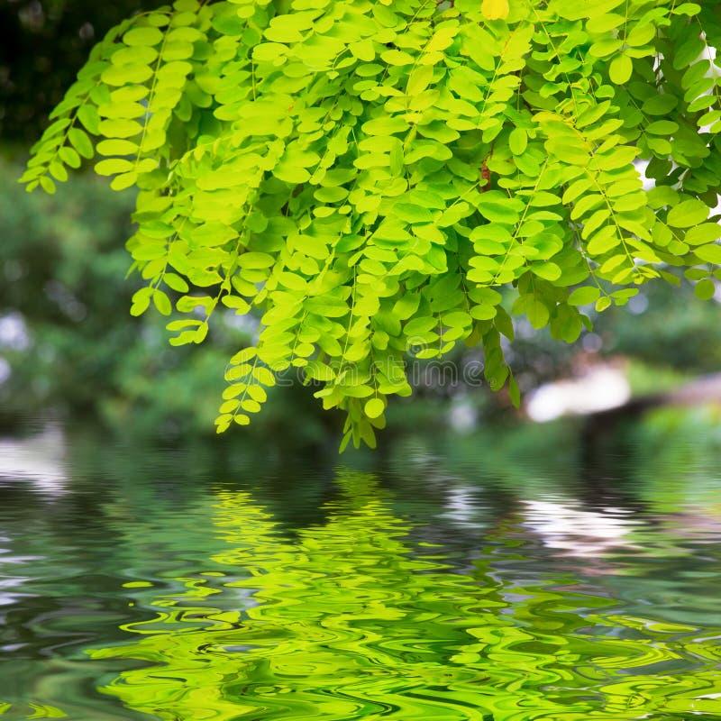 gałąź nad woda zdjęcie royalty free
