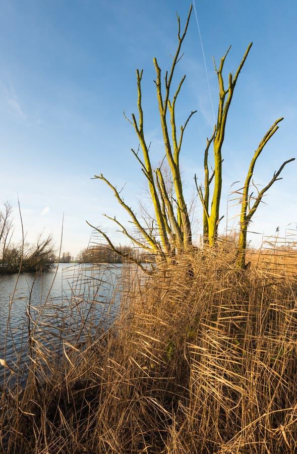 Gałąź nieżywy drzewo przeciw niebieskiemu niebu zdjęcia stock
