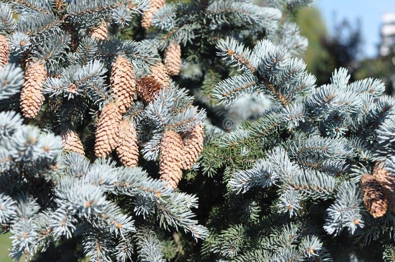 Gałąź nowego roku drzewo fotografia royalty free