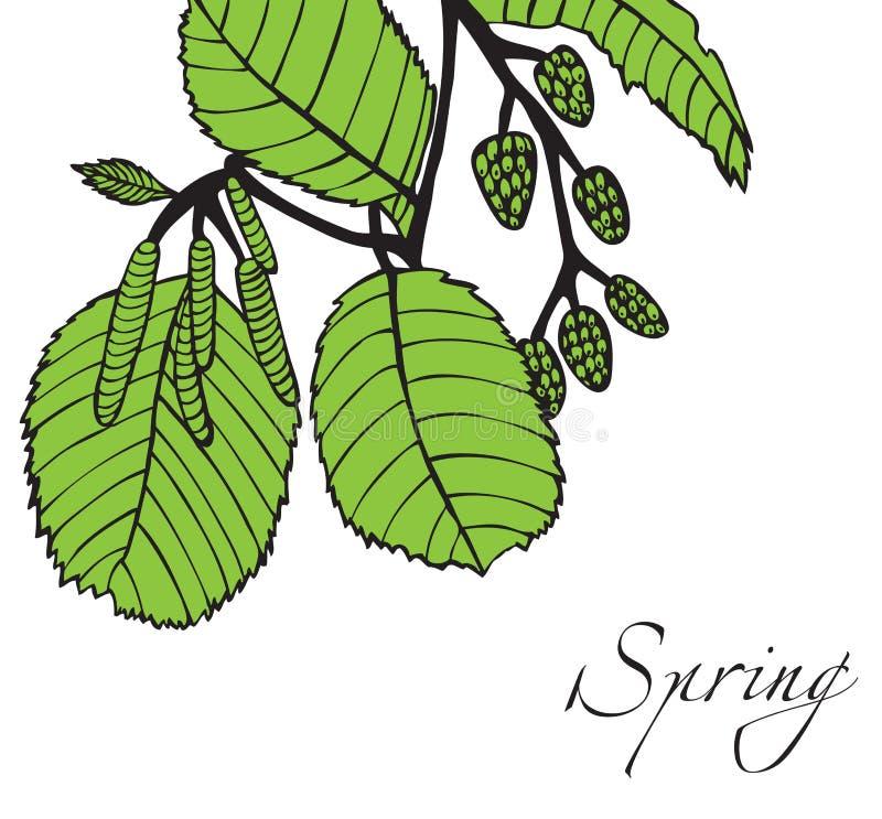 gałąź pączkuje wiosna drzewa ilustracja wektor