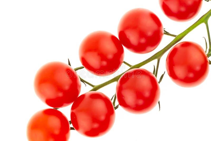 Gałąź pomidorów wiśniowych, czerwień wielkoowocowa na białym tle, zamykająca pyszne świeże warzywa obrazy stock